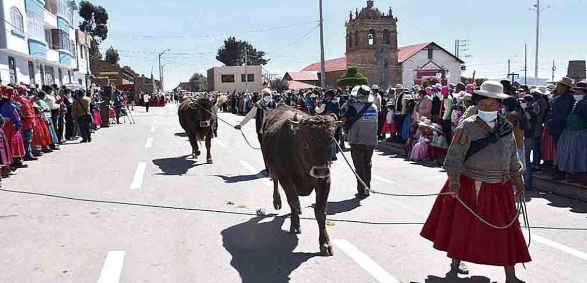 Puno: ganaderos de Ácora piden asistencia técnica para mejorar hatos