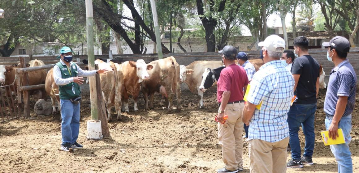 Midagri iniciará capacitación a más de 17 mil ganaderos de leche