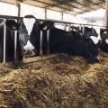 Algunos índices productivos de importancia económica para los establos lecheros