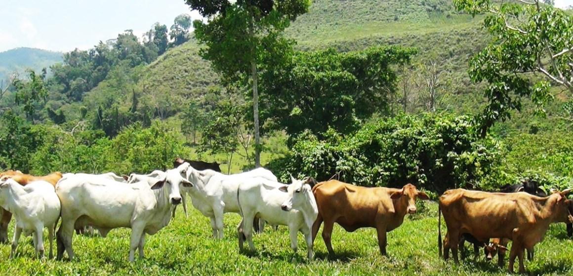 Caracterización de los sistemas de producción de vacunos, para el desarrollo ganadero en Oxapampa – Pasco (Parte 1)