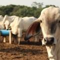 La FAO, la OMS y la OIE se unen para enfrentar amenaza de enfermedades zoonóticas