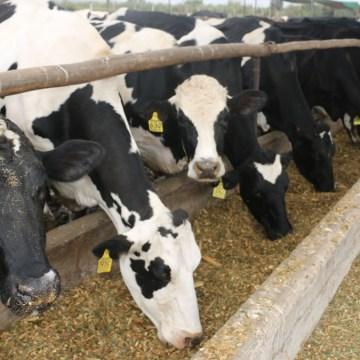 One Health, herramienta para la ganadería