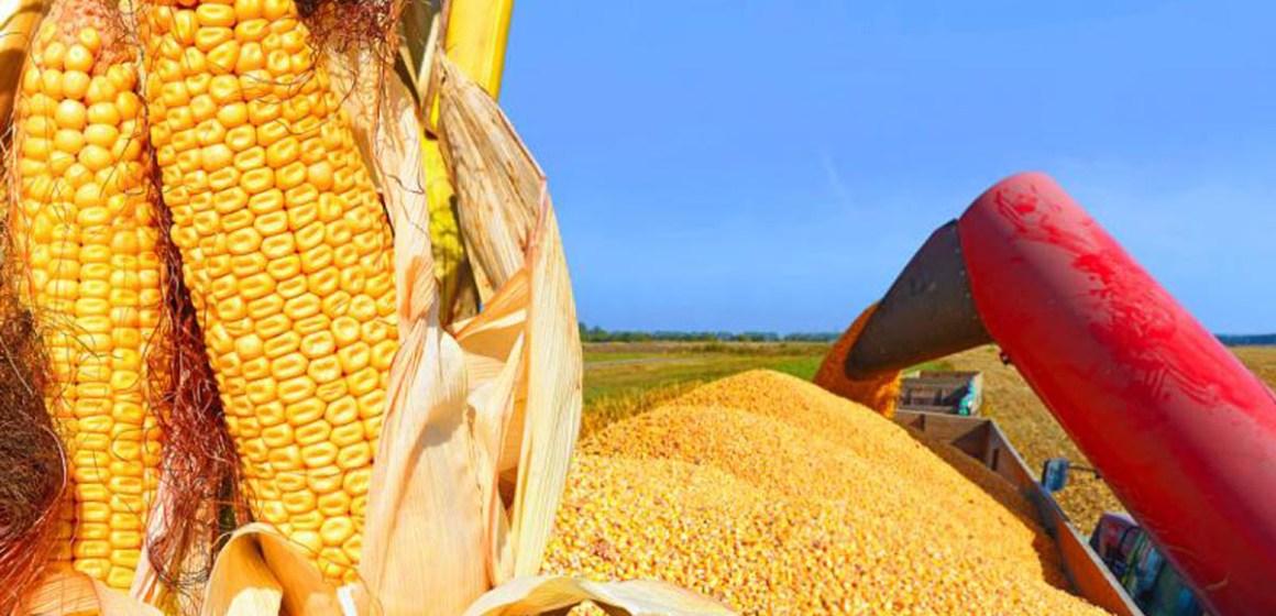 Precios de la soja y el maíz descienden en mercado norteamericano