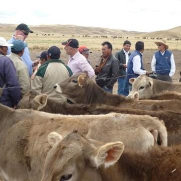 Ganadería se torna muy importante para economías de Puno y Tumbes tras cierre de fronteras