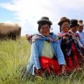 Pequeños productores ganaderos podrán ser proveedores del Estado